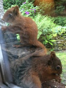 Trevor Cooper, Grasmere Red Squirrel Group